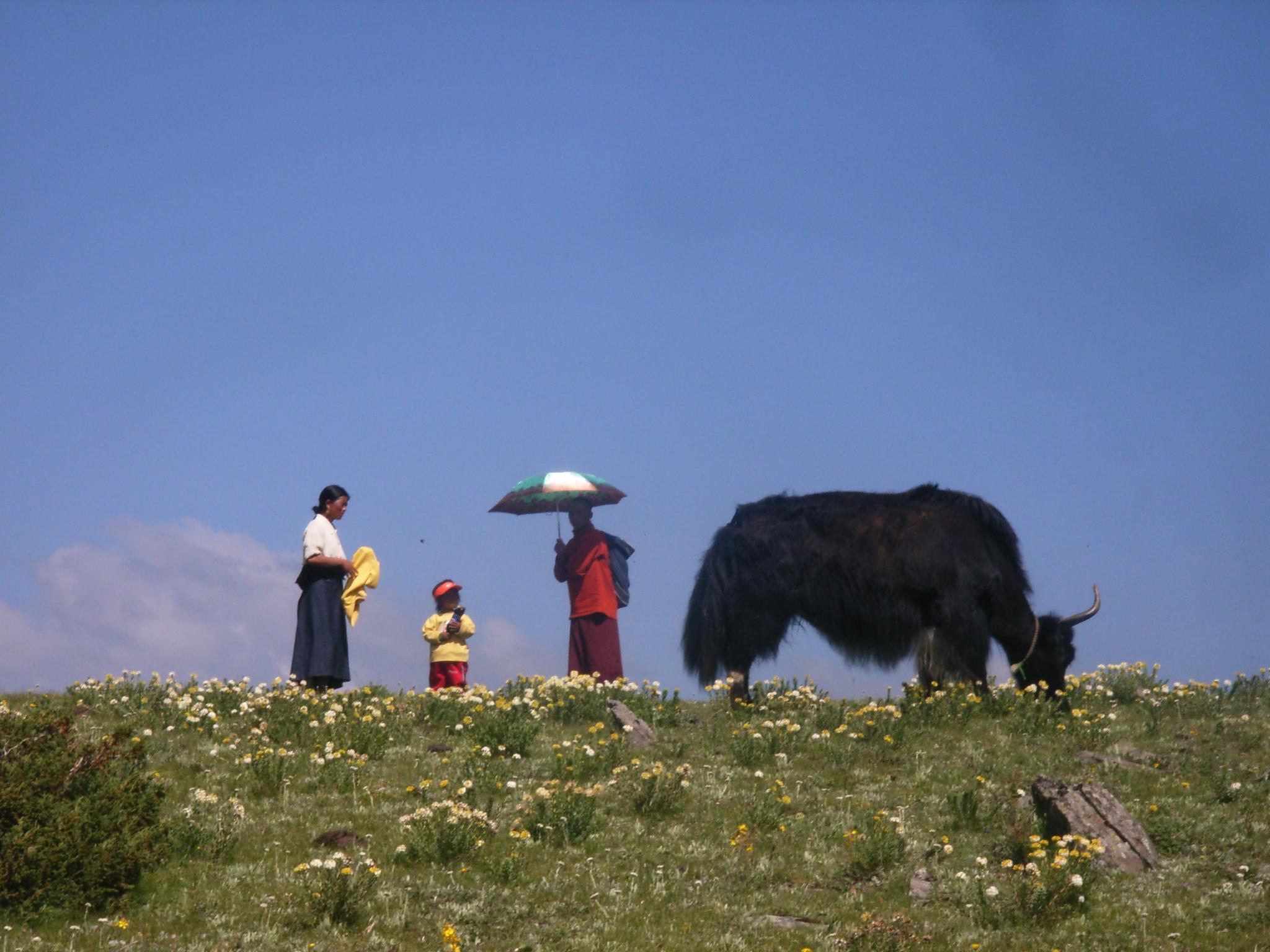 festival-tibetain2