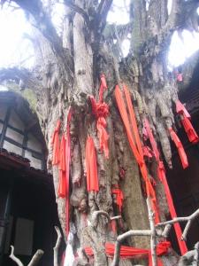 qinchengshan2