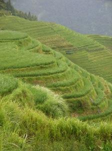 riziere-longji