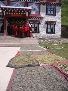 tagong-moines