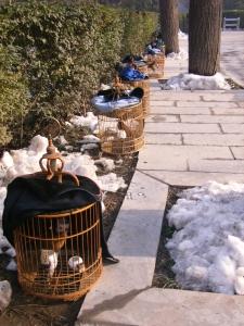 xian-oiseaux-neige